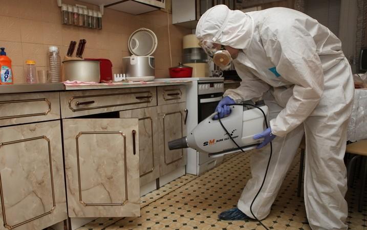 Чем и как травить клопов в домашних условиях. Чем травить постельных клопов в квартире?